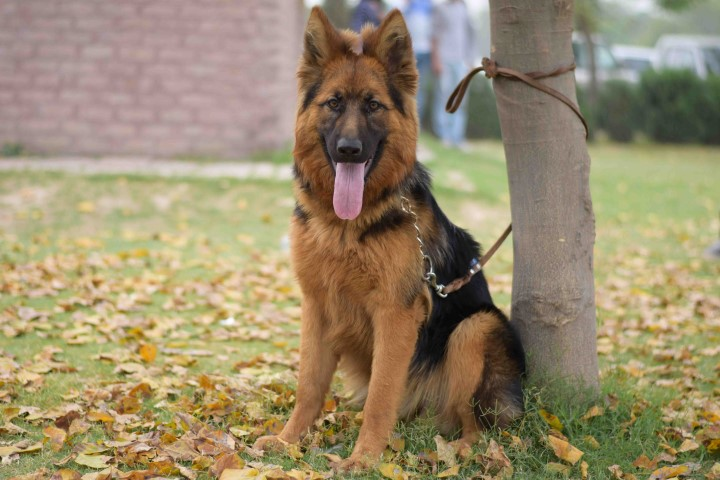 Lahore Dog Center